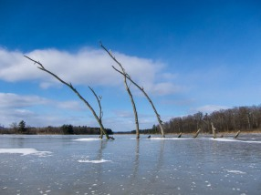 Another shot from Dead Creek: skeletal branches in the ice...