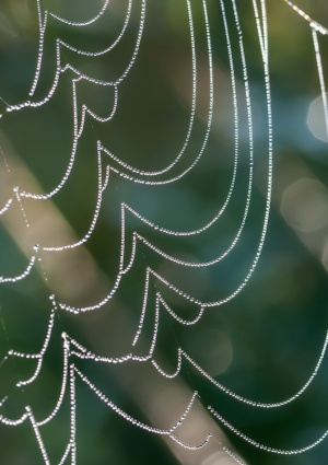 Beads of morning dew bedeck a spider's web out in our front field.