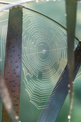 A spider's web built on one of our garden sculptures picks up the backlit glow of the morning sun.
