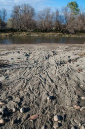 Marks in the silt and sand along the Winooski River in Richmond where beavers have dragged willow branches into the river.