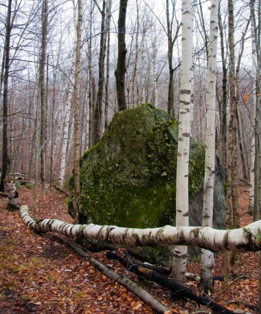A moss-fringed boulder, birches and a distant snow-dusted hillside up in Bolton Notch yesterday.