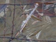 A frosted twig held in facetted pond ice yesterday morning.