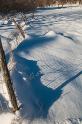 Our garden fence casts interesting shadows across the snow...