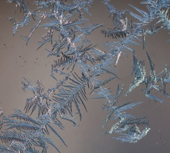 Frost crystals formed on the inside of our barn windows at -7 degrees.