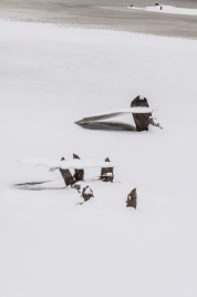 Suspended plates of ice cling to beaver-chewed sticks rising out of one of the Audubon Center ponds.