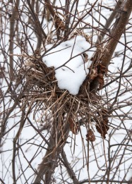 A snow-filled bird's nest in a field at the Audubon Center.