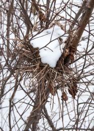 A snow-filled bird's nest in a field at the Audubon Center.