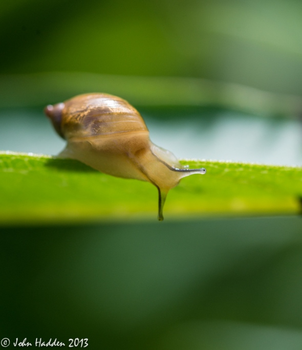 A snail edges along a leaf in the front field.