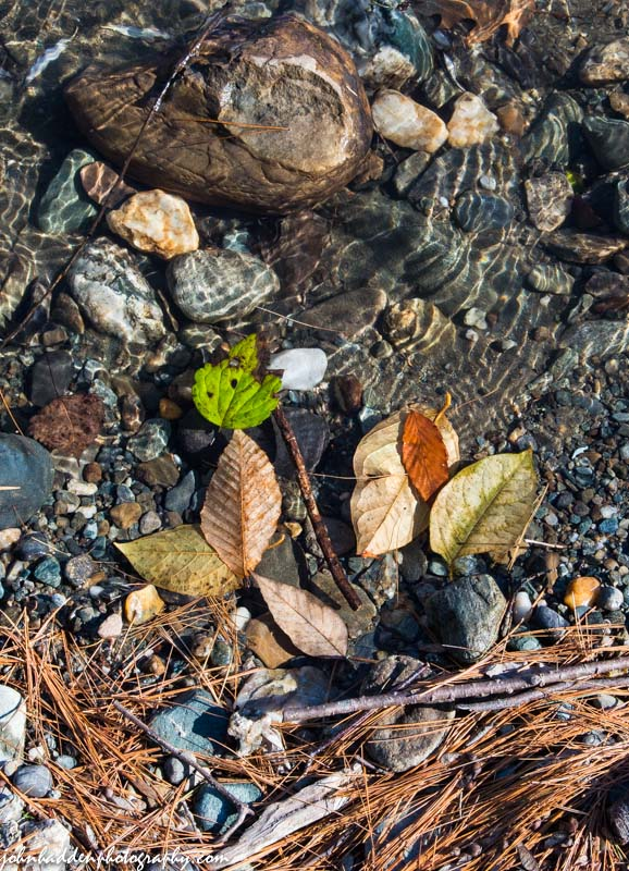 Fallen leaves and pine needles in the Huntington River