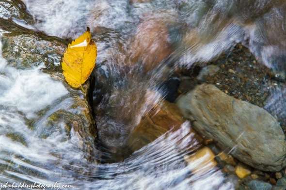 A yellow elm leaf gets hung up on a rock in Fargo Brook