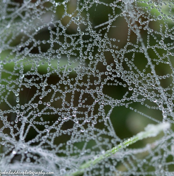 A spider web holds tiny frozen drops of dew