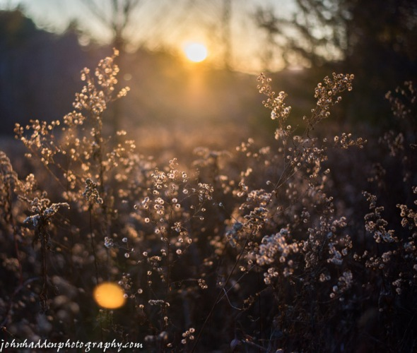 The setting sun backlights dried asters and goldenrod in our front field.