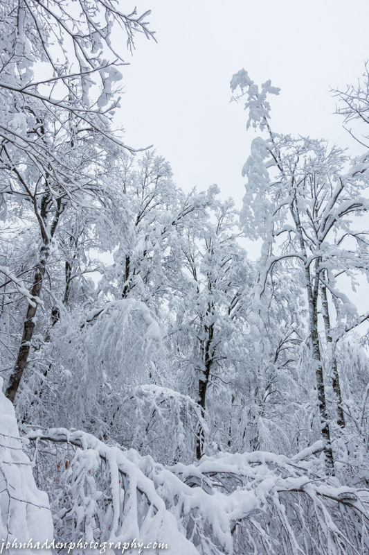 Snow loads the trees at Camel's Hump Nordic