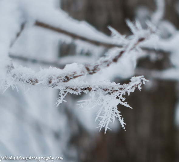 Delicate hoar frost on a crusted twig