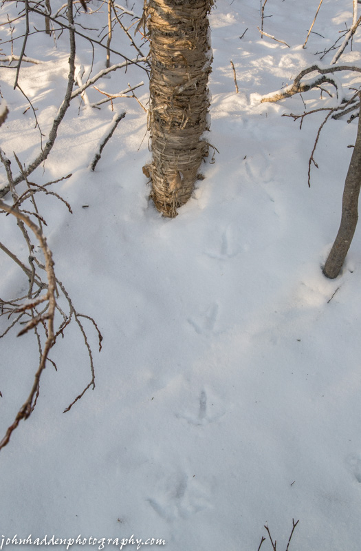 Turkey tracks by Fargo Brook