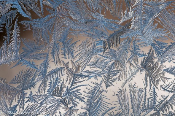 Fine frost feathers on a window