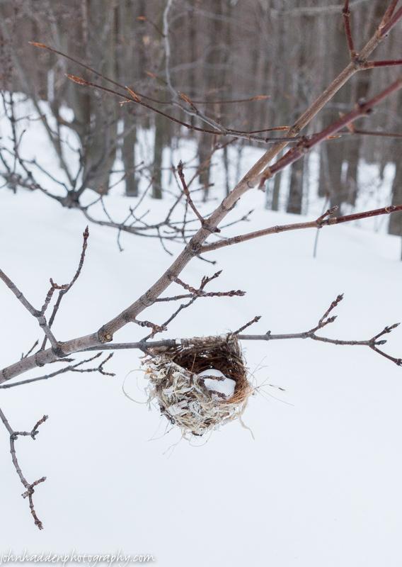 A snow filled bird's nest along the Honey Hollow trail