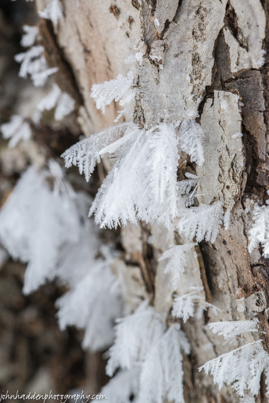 Fine frost feathers cling to an apple tree