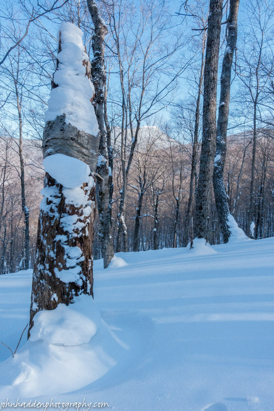 Deep snow, drifting, and Camel's Hump through the trees.