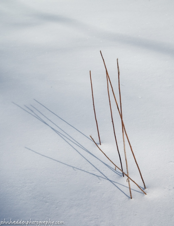 A cluster of dried stems cast shadows in fresh snow