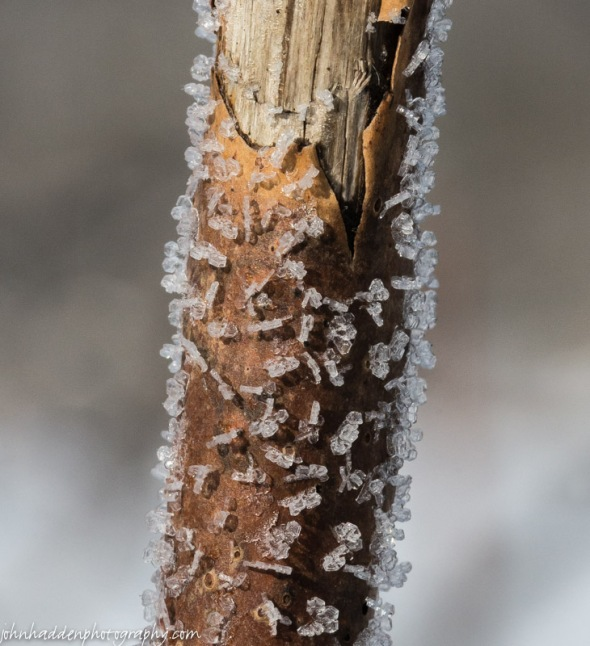 A close look at chunky frost crystals on sumac.