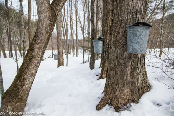 Sap buckets near the Huntington River