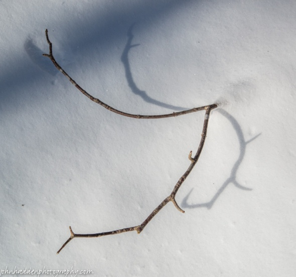 A twig in the snow looks like antlers of some deeply buried elk...