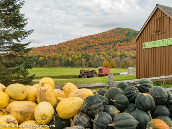 A bounty of squash at Moultrop Family Farm