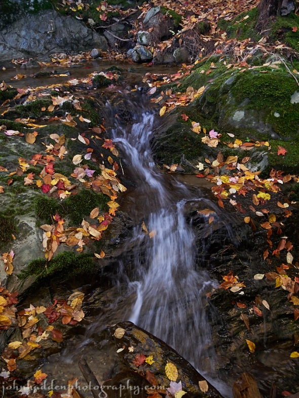 Bright leaves and falling water at Windekind Farm
