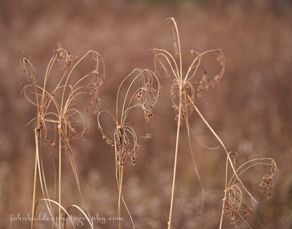 Dried grasses in the front field define the color of the day