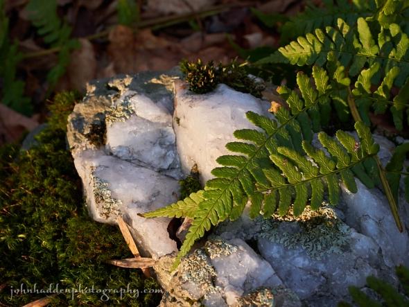 rock-fern-quartz