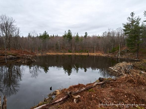 xmas-beaver-pond