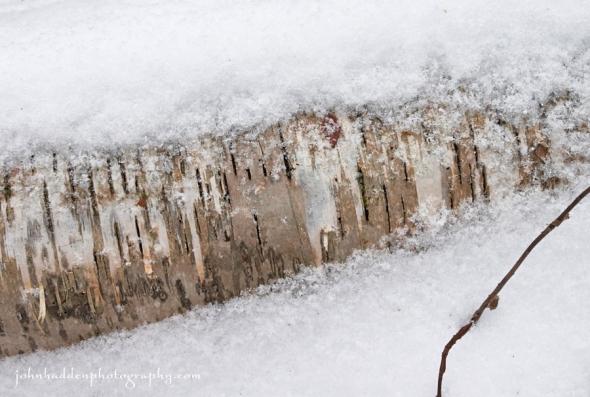 birch-snow