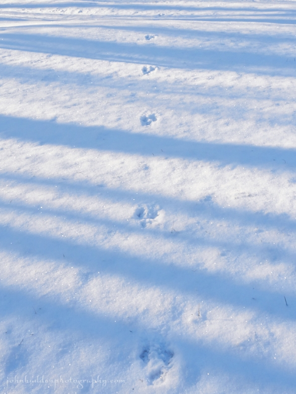 rabbit-tracks