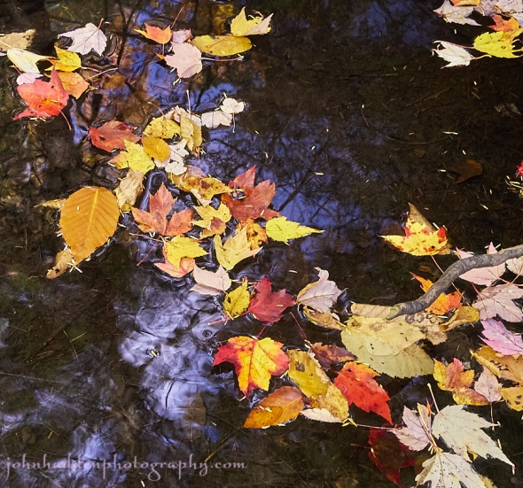 leaves-on-water