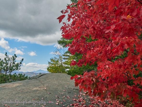 red-maple-poke