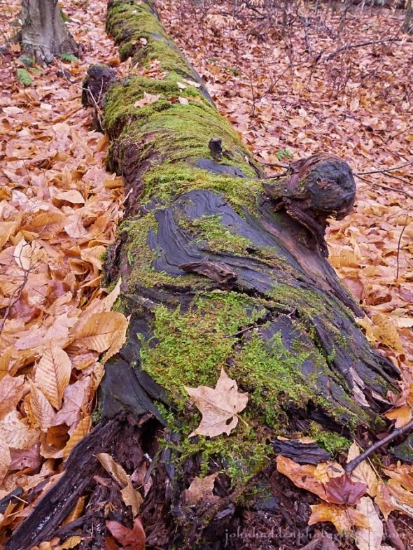 birch-logg