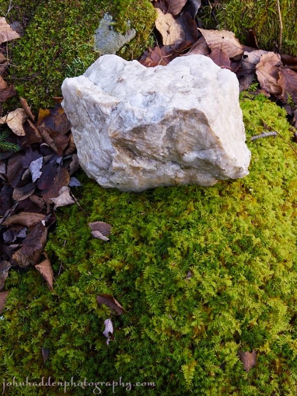 quartzite-moss