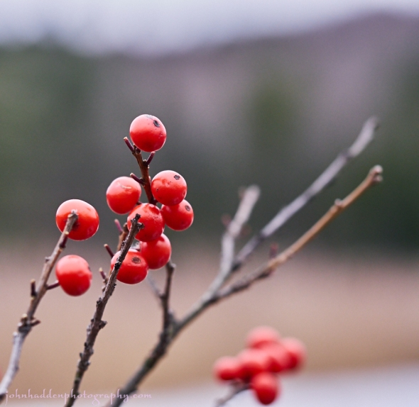 winterberry-pond