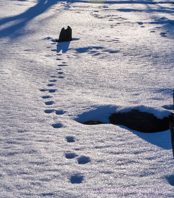 poind-tracks