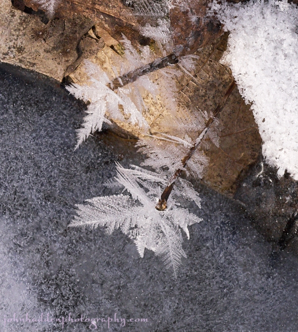frost-feathers-twigs