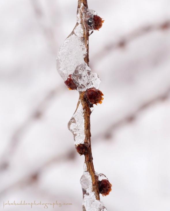 larch-ice