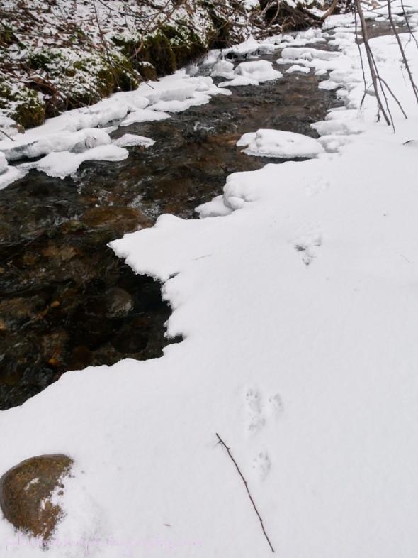 mink-path
