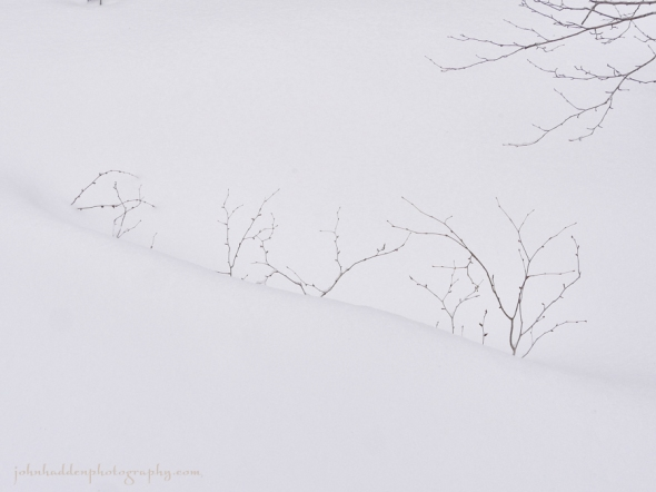snow-twigs