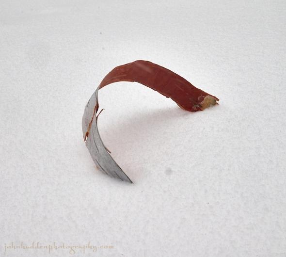 birchbark-snow