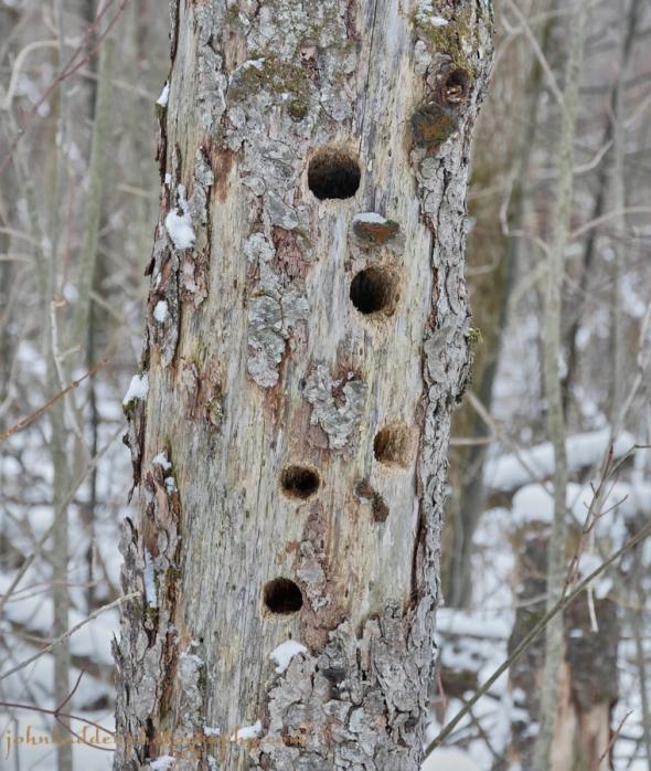 many-holes