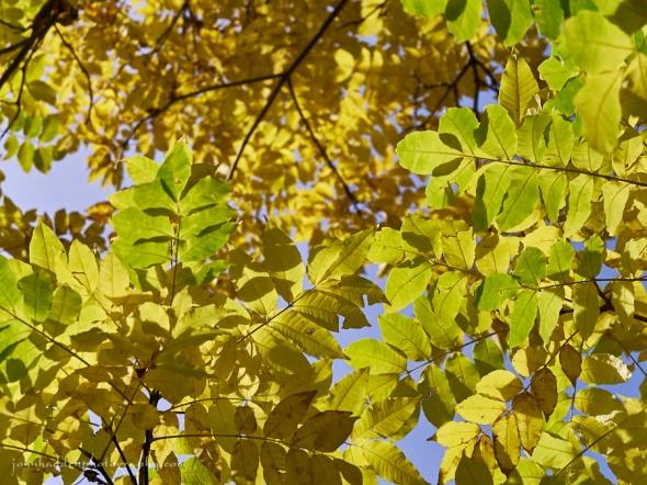 arum-cork-leaves