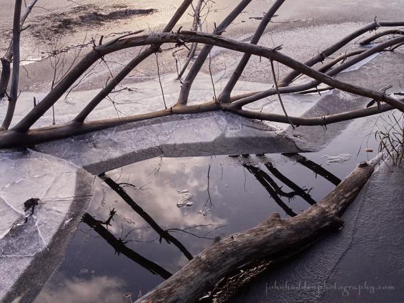 beaver-pond-ice