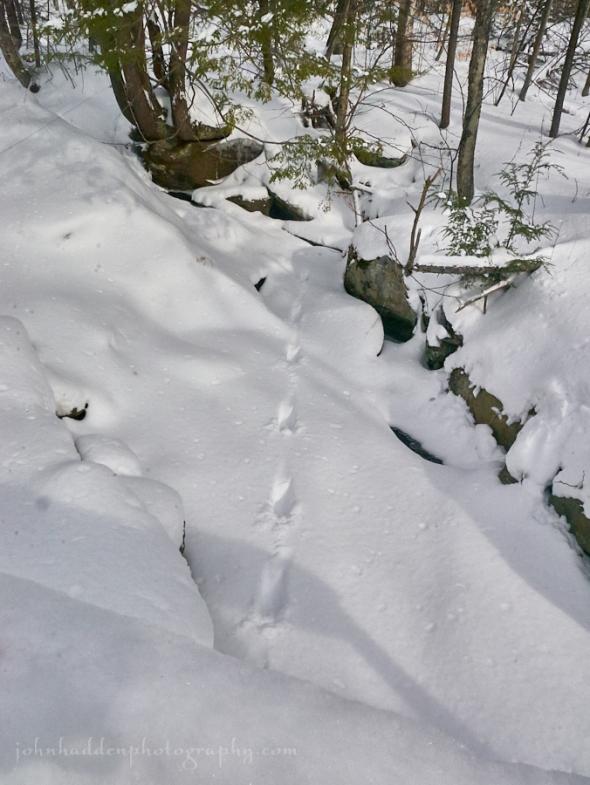 fisher-tracks