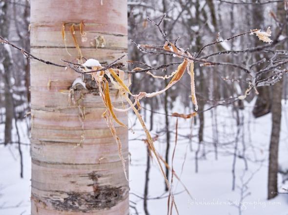 birch-tinsel
